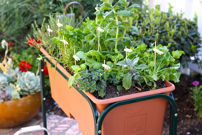 How to Plant a Raised Bed Herb Garden: Recipes Using Herbs ...
