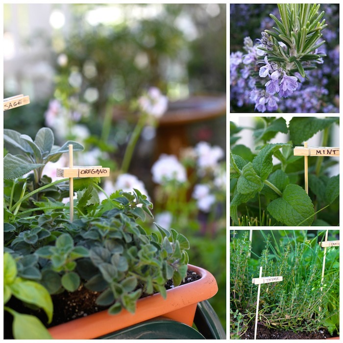 How to plant a raised bed herb garden for cooking!