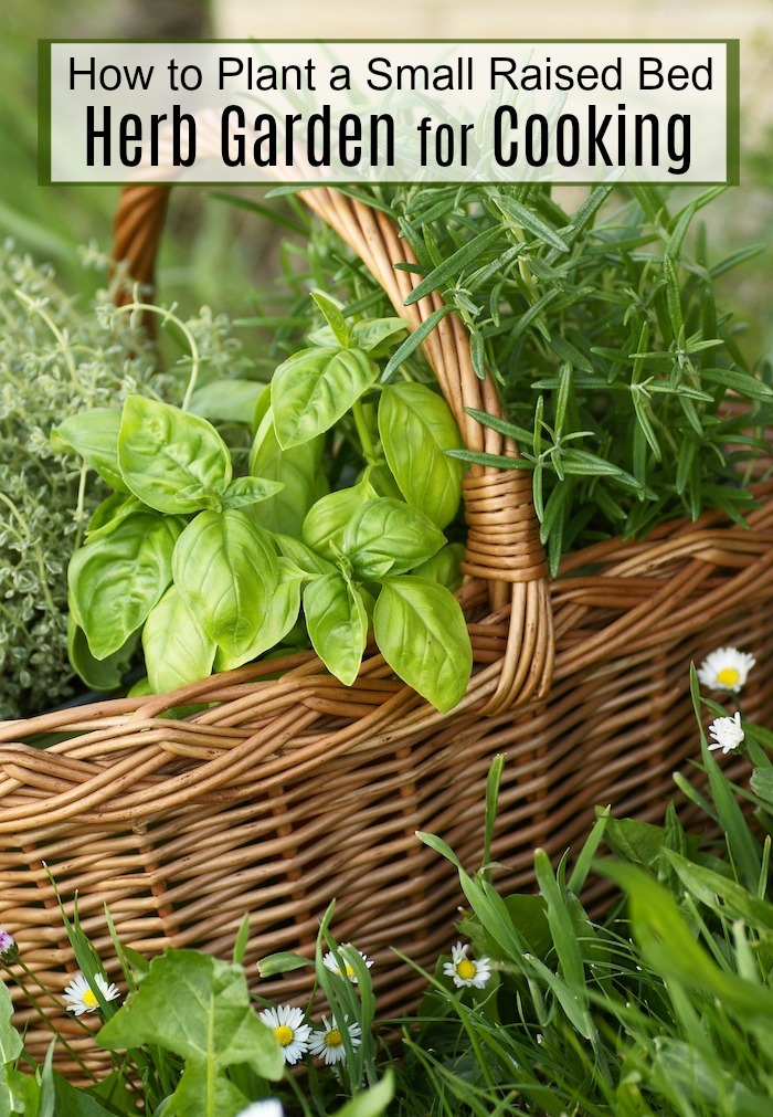 A wicker basket filled with fresh herbs: How to Plant a Raised Bed Herb Garden! : Recipes Using Herbs