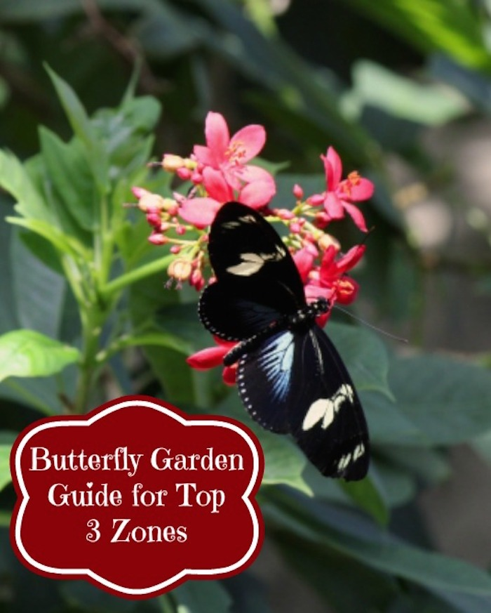 Gardening Tips for Every Space!
